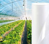 Durable greenhouse film Vatan Plastik, Turkey. Affordable price