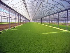 Film for greenhouses Vatan Plastik. Order film for greenhouses