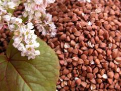 Продам зернові насіння