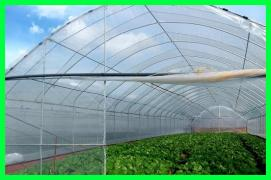Reliable greenhouse film Vatan Plastik, Turkey. Sell film