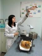 Ветеринарная клиника Харьков. Вызов ветеринара на дом